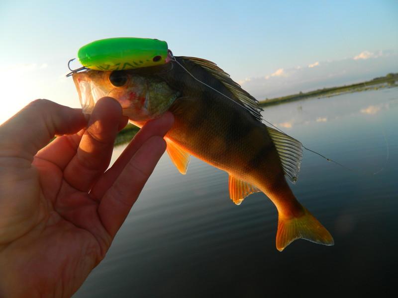 о рыбалке для начинающих