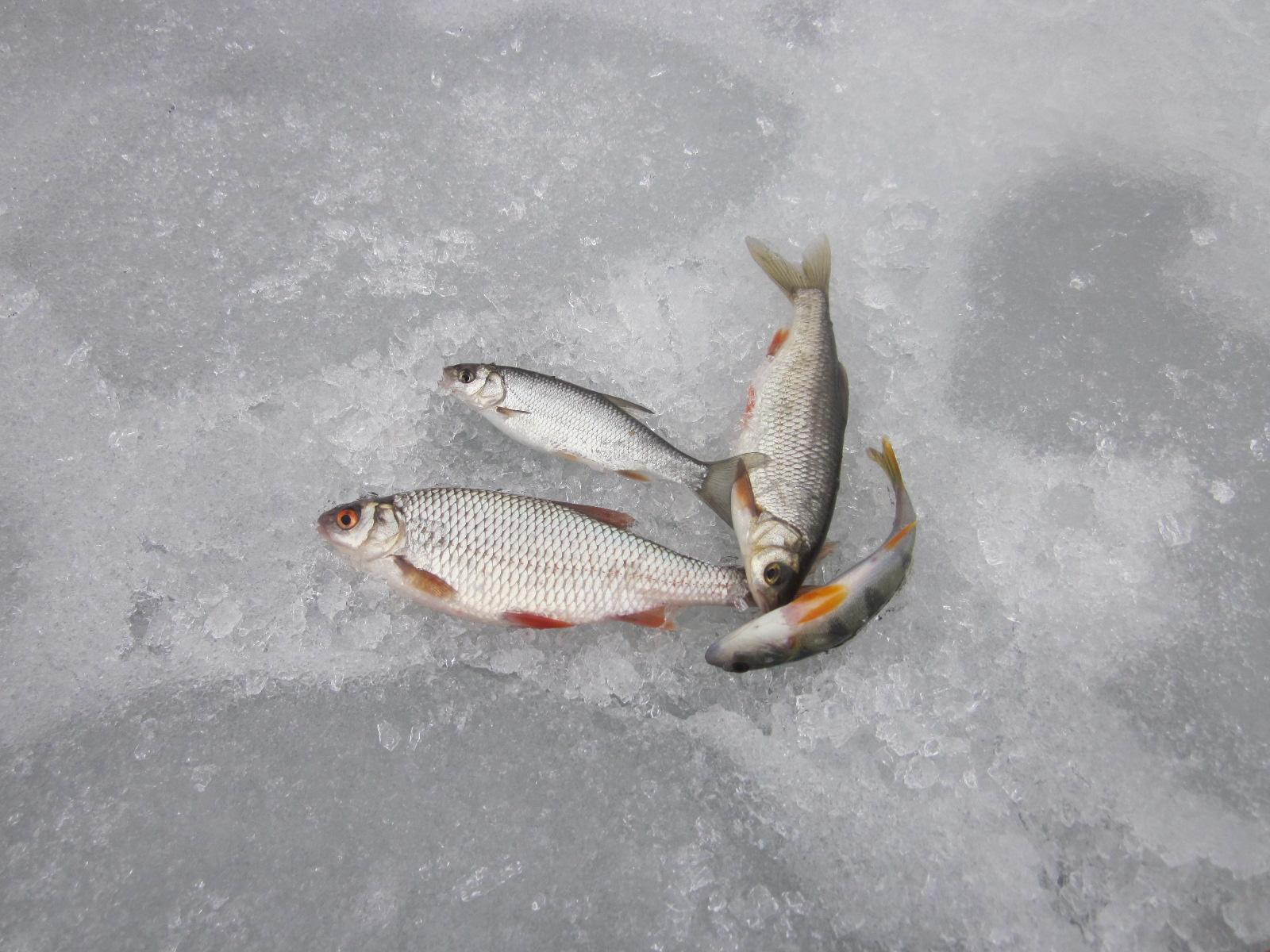 прогноз рыбного клева в юрге