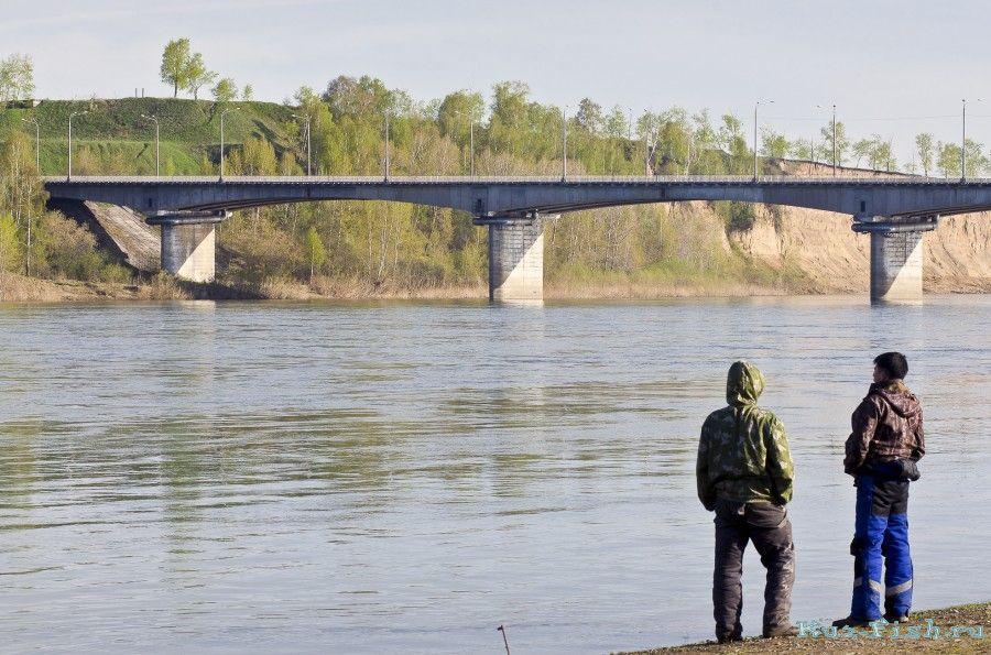 рыбалка на ильинском мосту