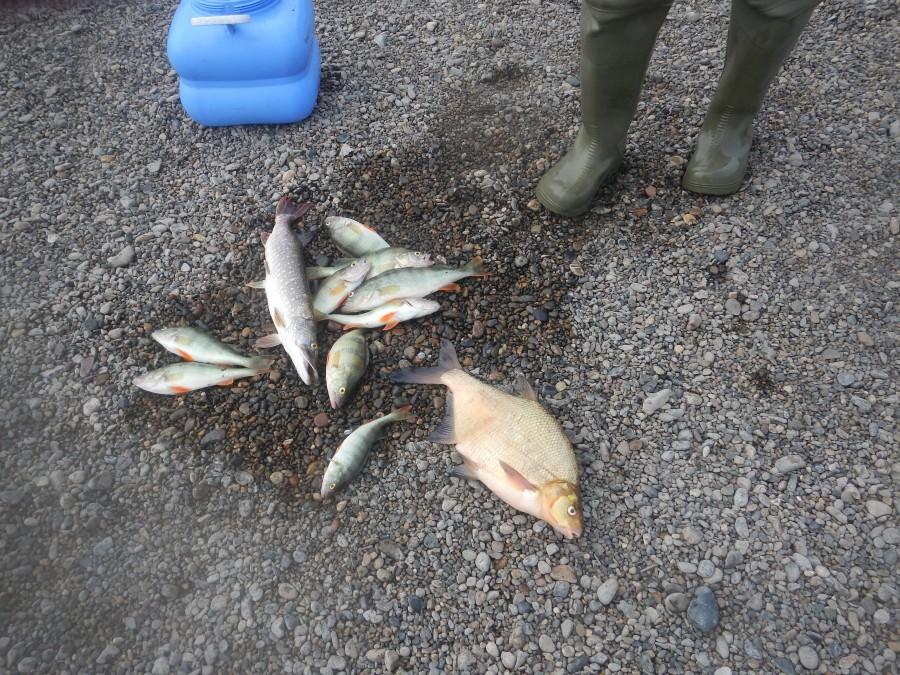 рыбалка на томи май