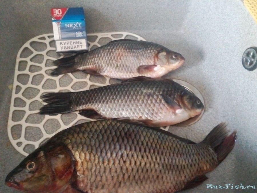 В следующие дни, как ни странно, ни одной рыбы я не поймал.