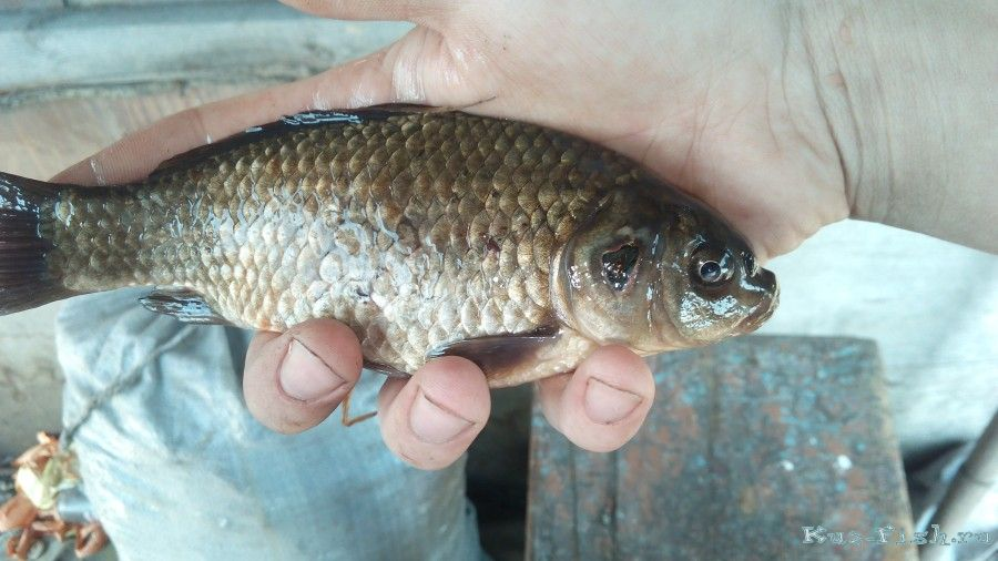 рыбалка как состояние
