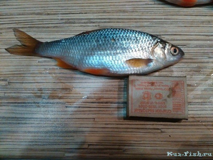 куз фиш рыбалка