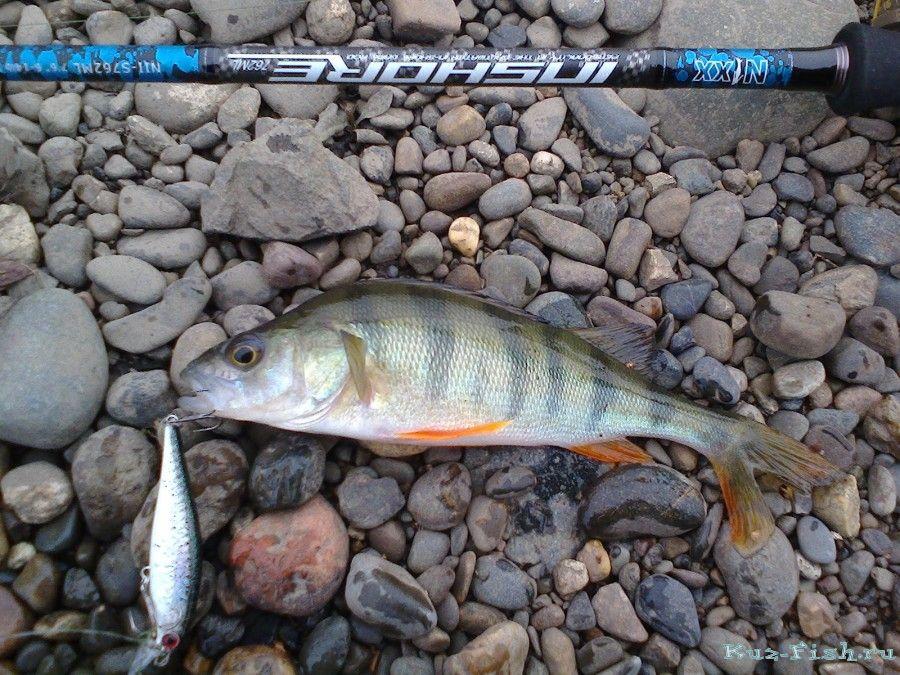 Рыбалка на щёлковском карьере