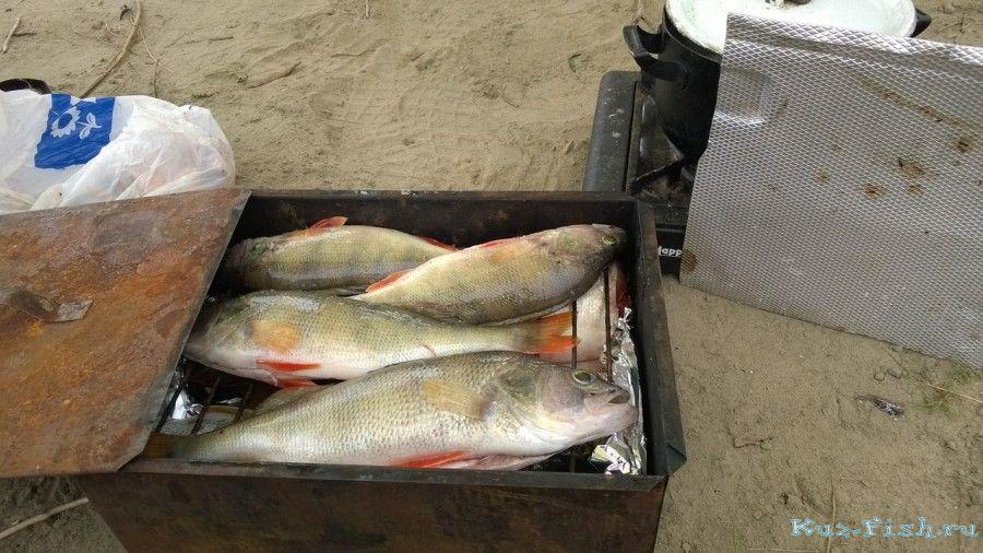 отчет рыбалки на оби