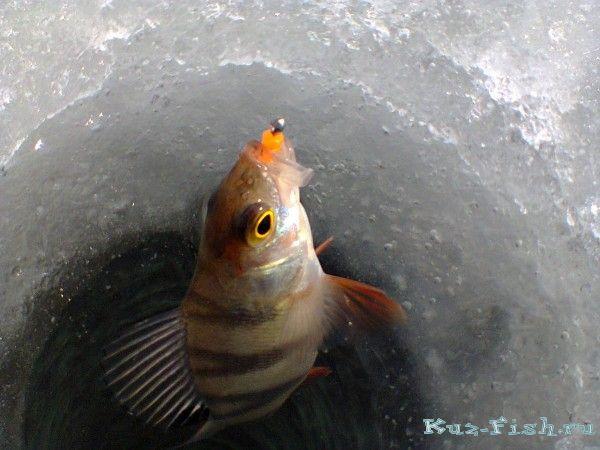 Топтушка алтайский край рыбалка