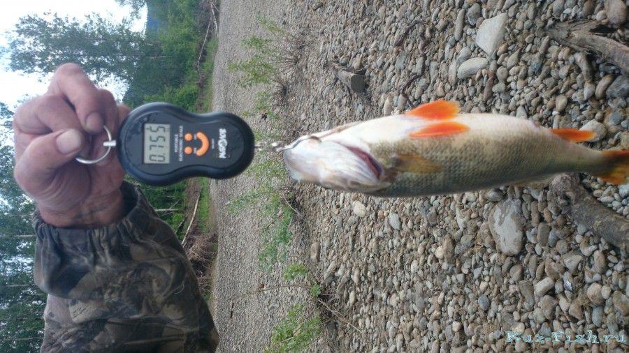 рыбалка на томи банново