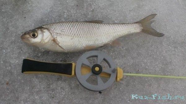 город елец рыбалка