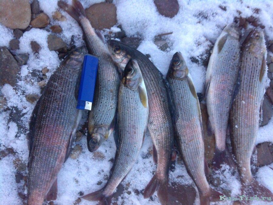 самая лучшая рыбалка в кемеровской области