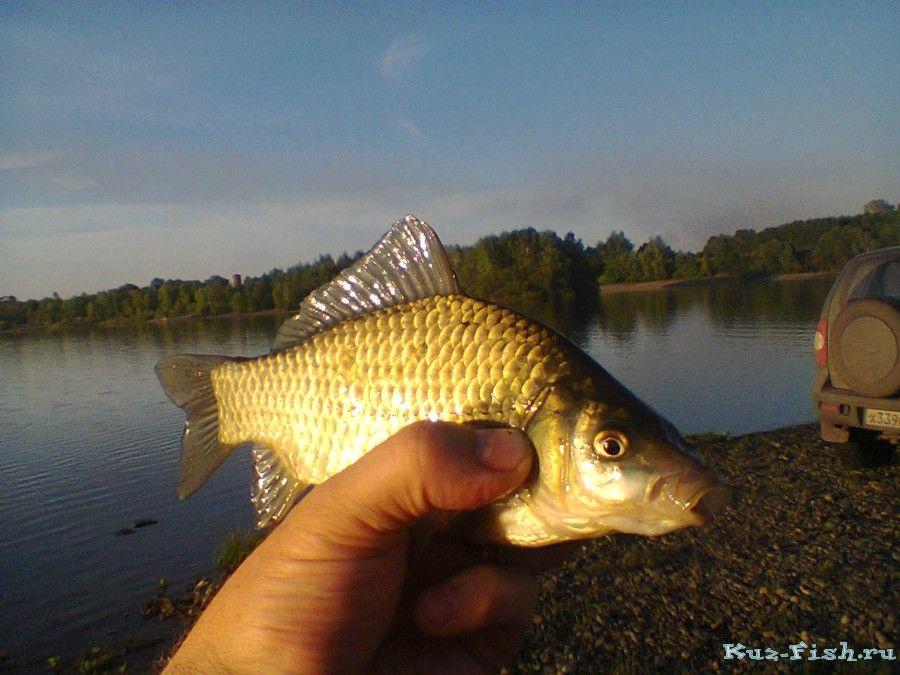 карьер новинка рыбалка