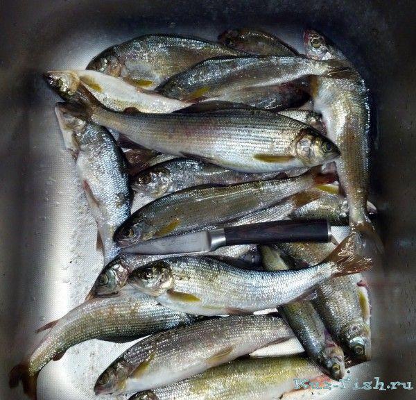 рыбалка на мрассу реке