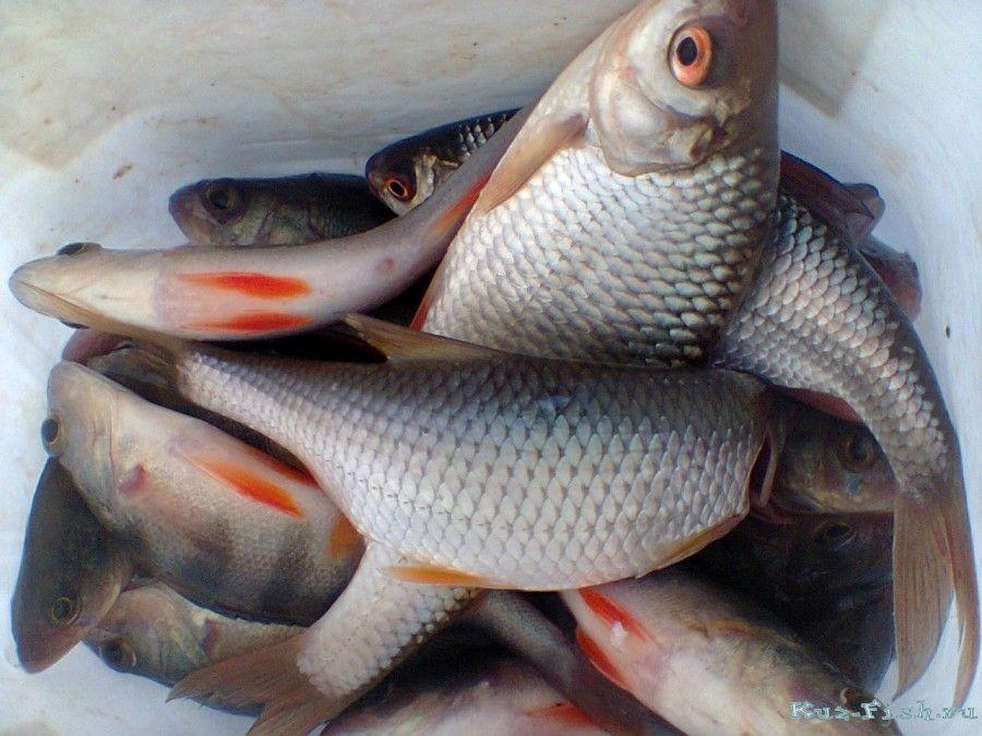 рыбалка на беловском водохранилище летом