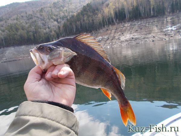 весенний запрет на рыбную ловлю в куйбышевском водохранилище