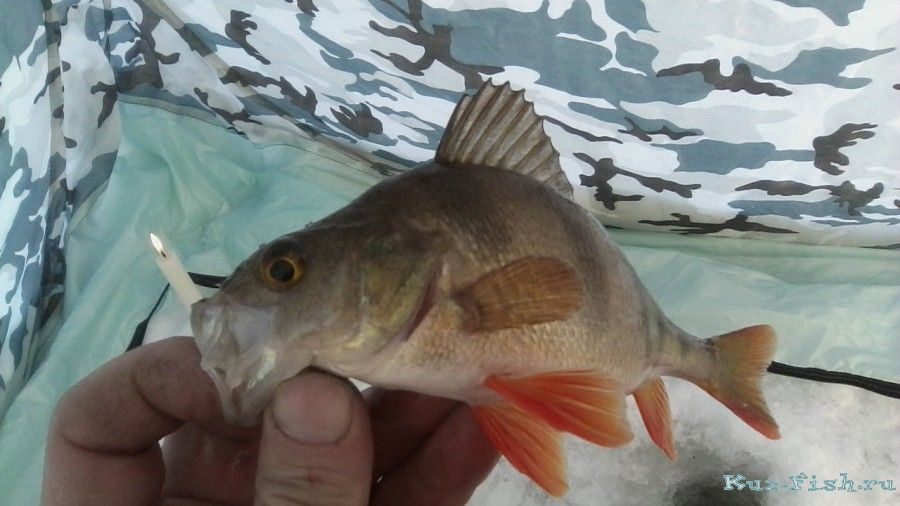 рыбалка на гагаринском водохранилище