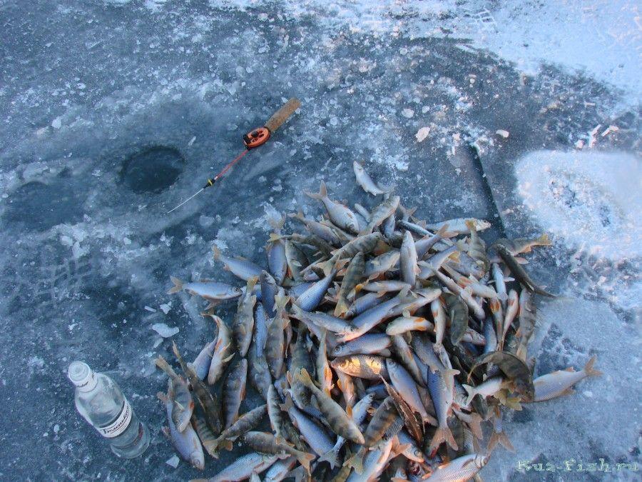 Клюет-ли рыба при северо-восточном ветре