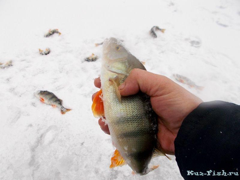 берфорум рыбалка