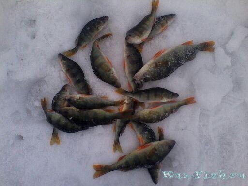 Ежедневный прогноз клева рыбы для города юрга (россия) и его окрестностей разработан специально для рыбаков на основе прогноза погоды для региона кемеровская область, сезонных календарей сроков нереста и периодов активности рыбы, а также уровней воды и паводков в реках данного региона.