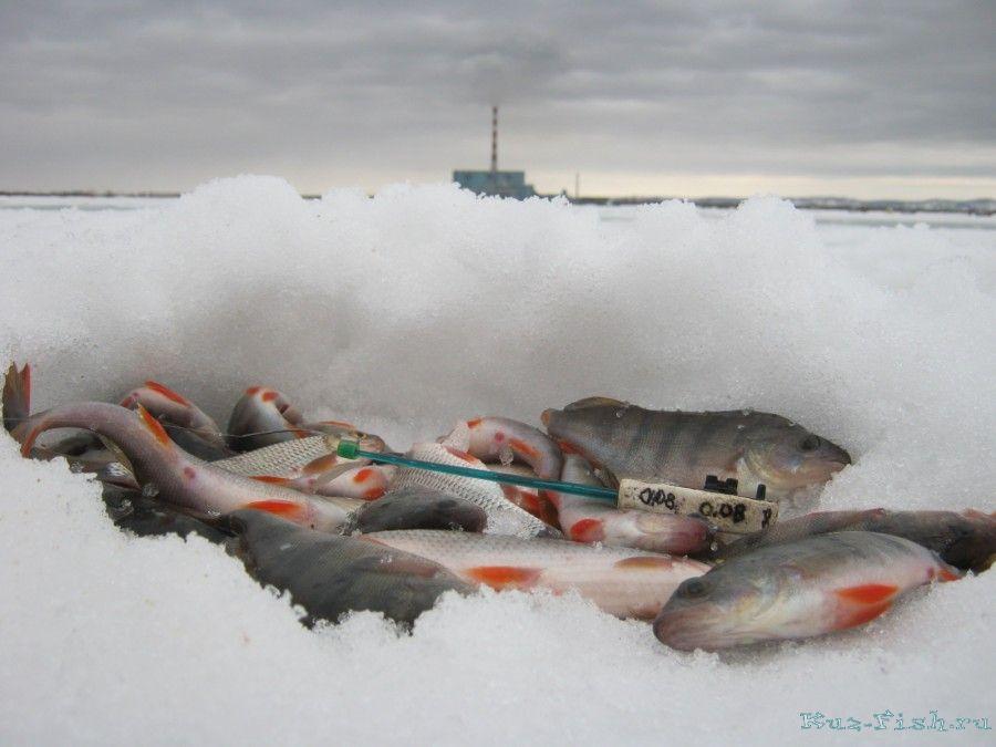клев рыбы тюхтет