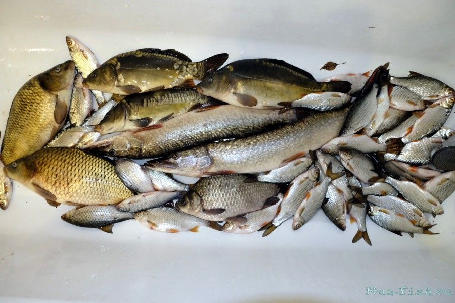 платная рыбалка коновалово цена в белово