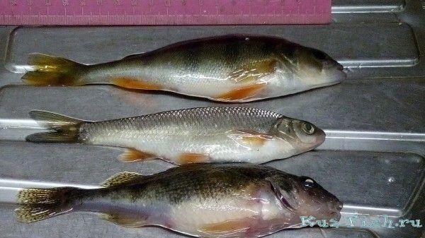 сорога ру вологда отчеты о рыбалке 2017