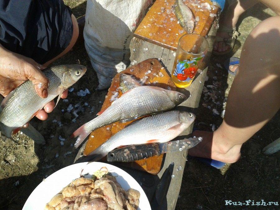 рыбалка на алтае бурла