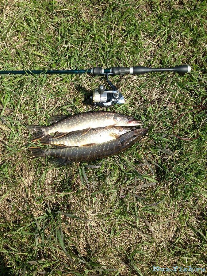 иня рыбалка