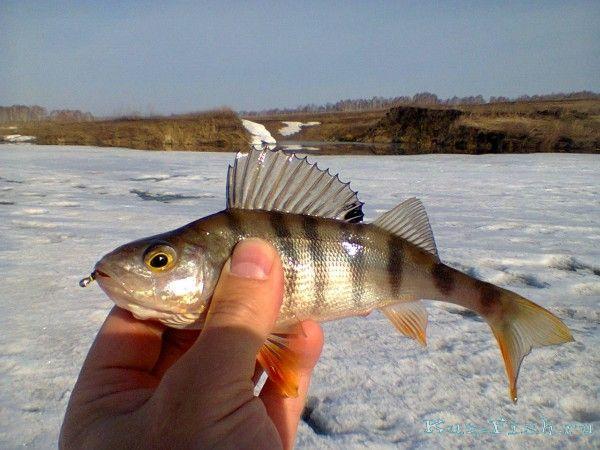 платная рыбалка в карповской