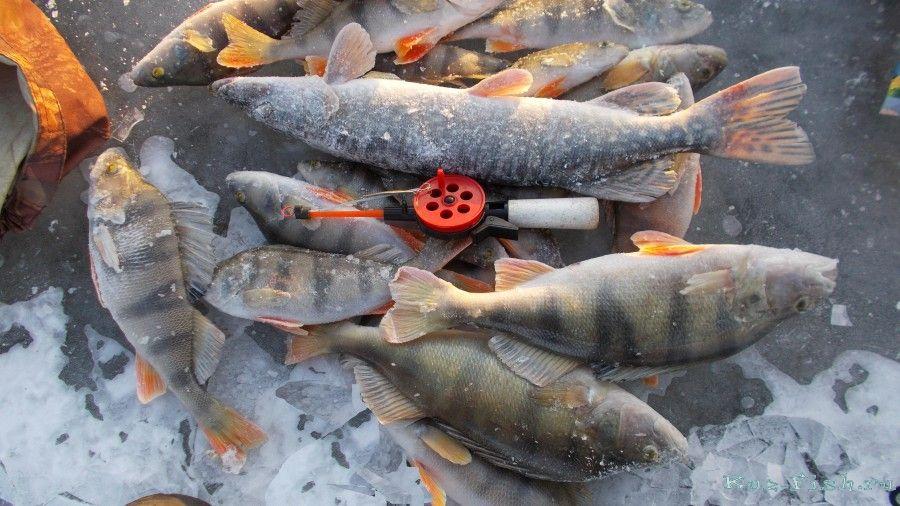 отчеты насчёт рыбалке во  лопатино