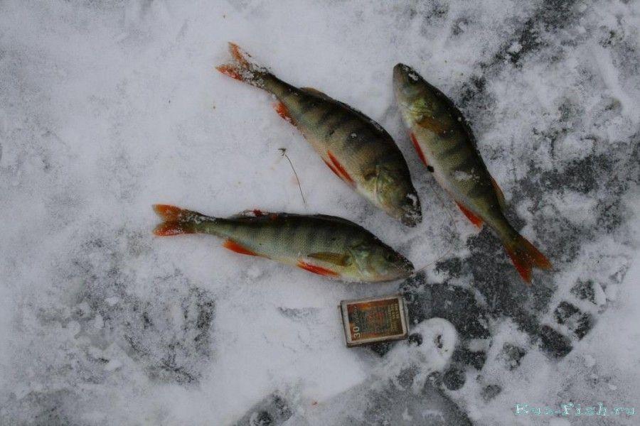 Рыбалка зимой томской области