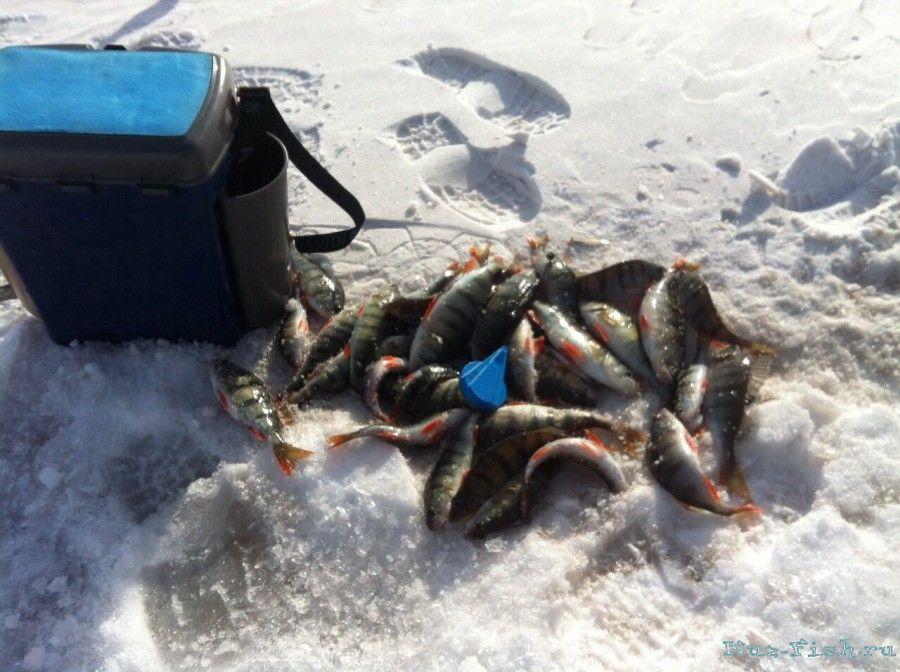 Отчет о зимний рыбалки