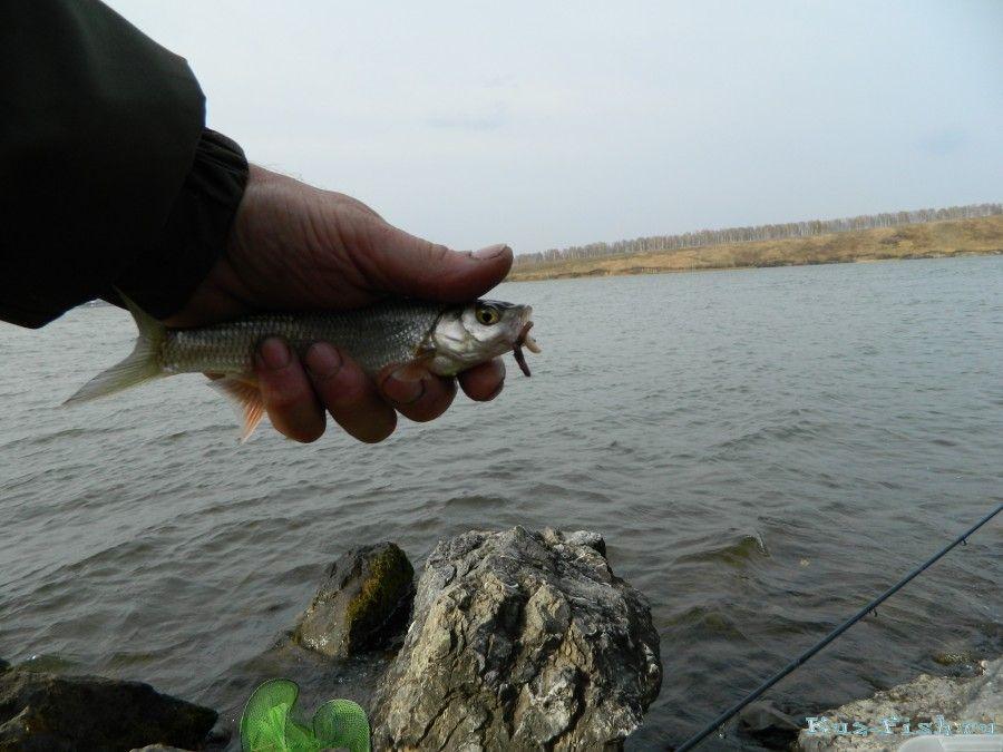 Отчет о рыбалке на шушпанском водохранилище