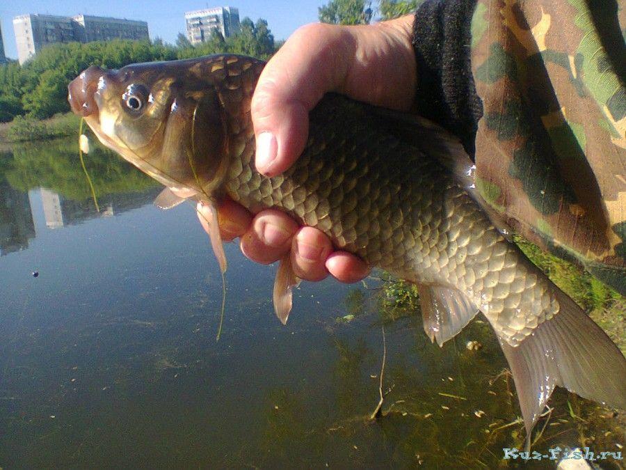 рыбалка в белово места рыбалки