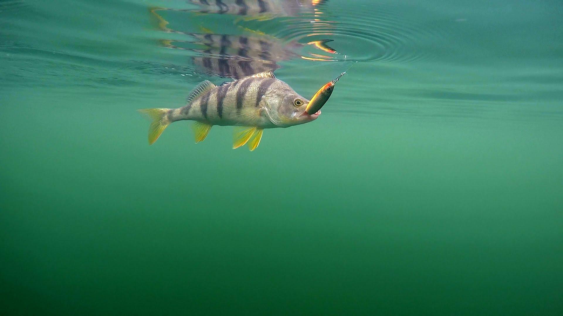 обои для рыбалки