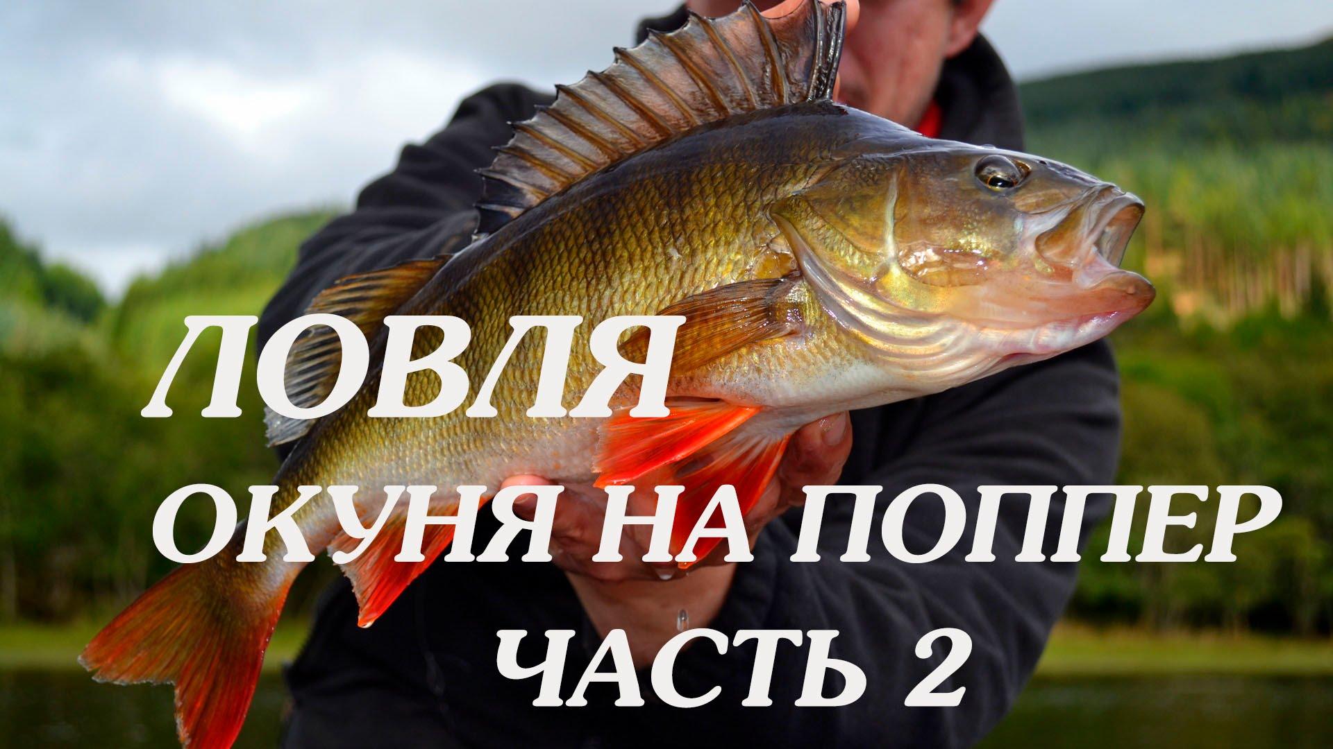рыбалка на окуня на поппер